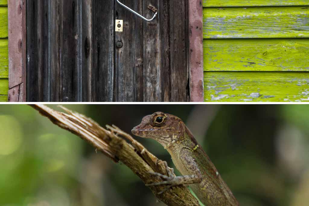 7. Lime green door in Trinidad, lizard Cuba
