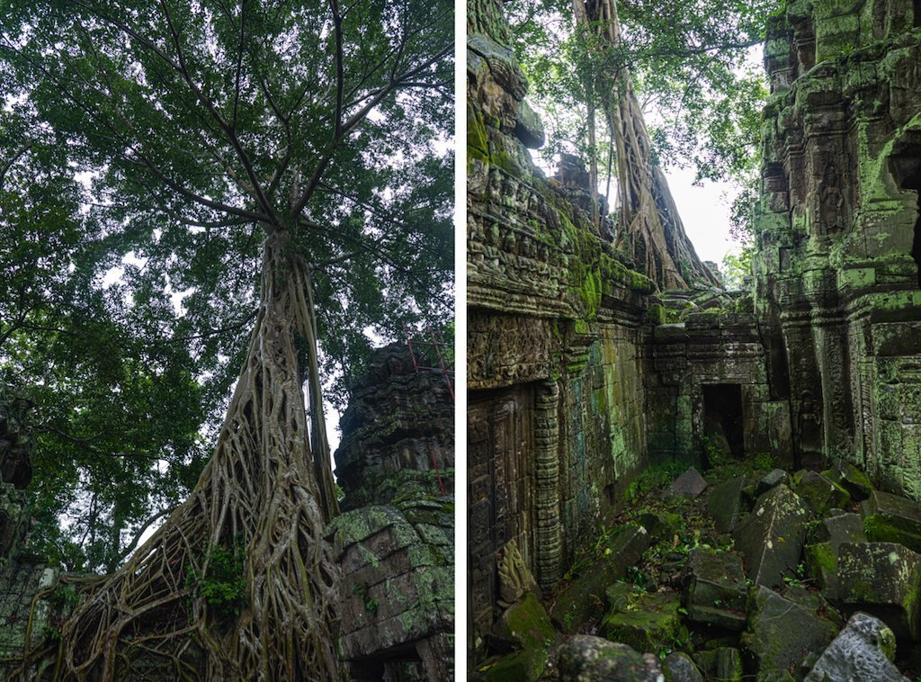 17. Ta Prohm tree