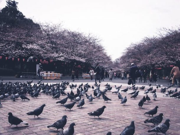 Ueno Park - Japan Itinerary 14 days and 7 days