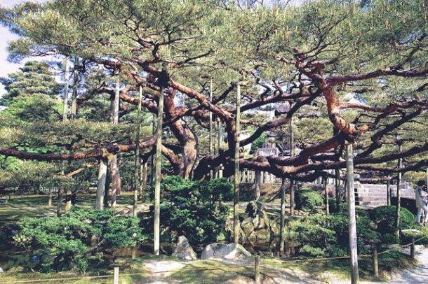 Kenrokuen gardens Kanazawa - Japan Itinerary 14 days and 7 days