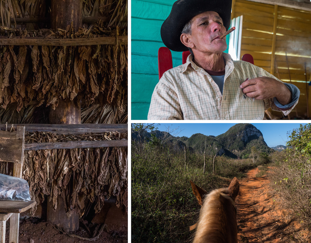 2. Vinales tobacco farm, drying, cowboy, horseride. Things to do in Cuba, how to do Cuba on a Budget, one month itinerary for Cuba