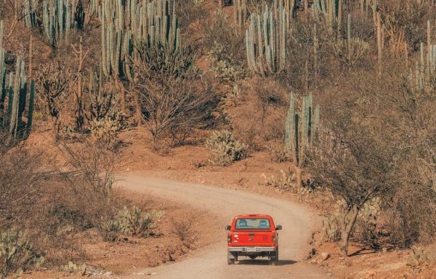 Cactus reserve for driving in Mexico road trip planner