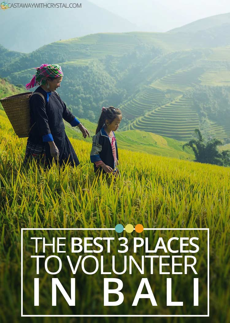 Want to volunteer in Bali? Here is a short list of the 3 best places to volunteer in Bali and why you should check them out right now!