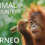 Amazing Animals in Borneo