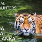 Amazing Animals in India, Nepal and Sri Lanka