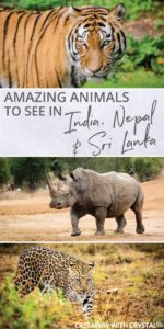 What animals can you see in India?   Amazing animals in Sri Lanka   How to see rhino in Nepal   How to see tigers and leopards?   Where to see elephants?   See monkeys in Sri Lanka   #Animals #India #Nepal #SriLanka #Tiger #Leopard