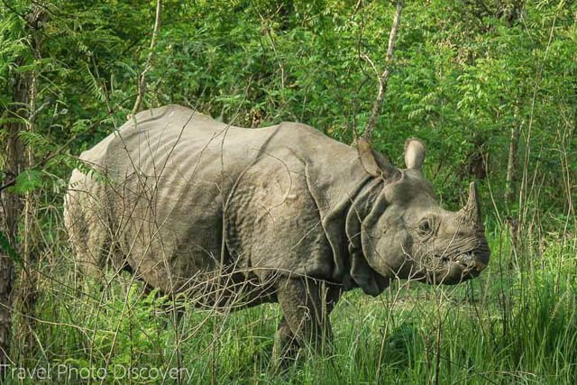 What animals can you see in India?   Amazing animals in India and Nepal   How to see rhino in Nepal   How to see tigers and leopards?   Where to see elephants?   See monkeys in Sri Lanka
