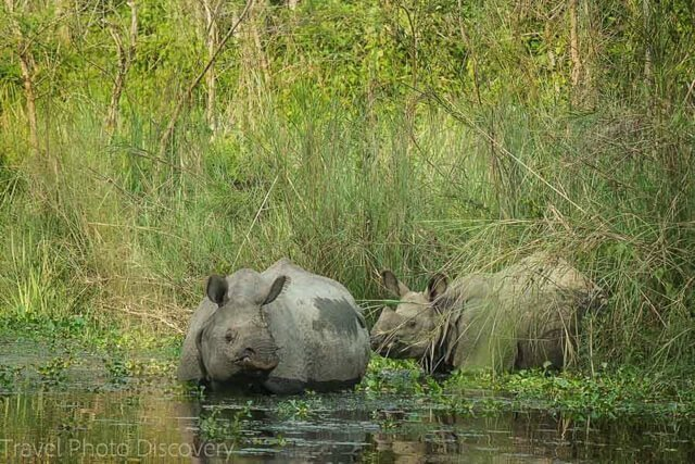 What animals can you see in India?   Amazing animals in Nepal   How to see rhino in Nepal   How to see tigers and leopards?   Where to see elephants?   See monkeys in Sri Lanka