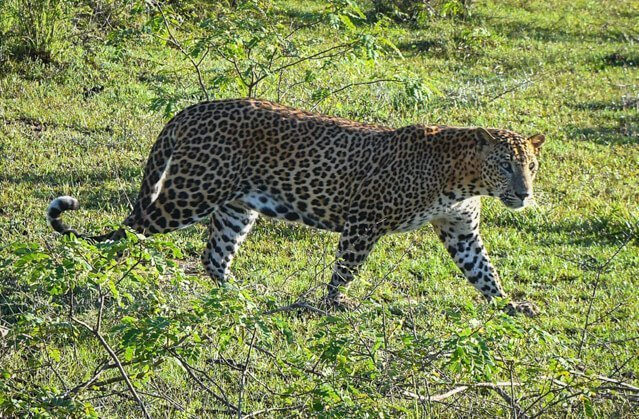What animals can you see in India?   Amazing animals in Sri Lanka   How to see rhino in Nepal   How to see tigers and leopards?   Where to see elephants?   See monkeys in Sri Lanka