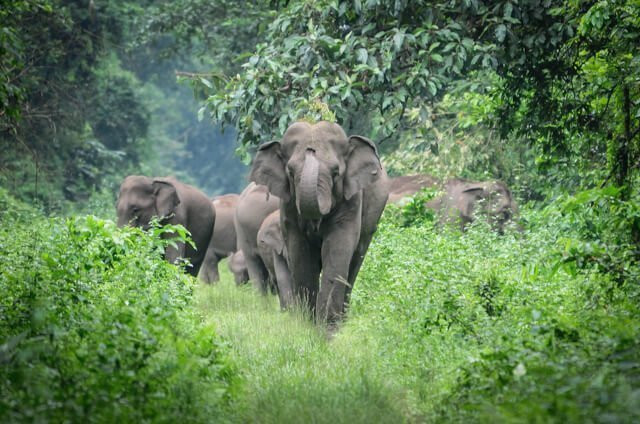 What animals can you see in India?   Amazing animals in India   How to see rhino in Nepal   How to see tigers and leopards?   Where to see elephants?   See monkeys in Sri Lanka
