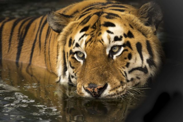 What animals can you see in India?   Amazing animals in India and Sri Lanka   How to see rhino in Nepal   How to see tigers and leopards?   Where to see elephants?   See monkeys in Sri Lanka