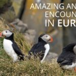 Amazing Animals In Europe