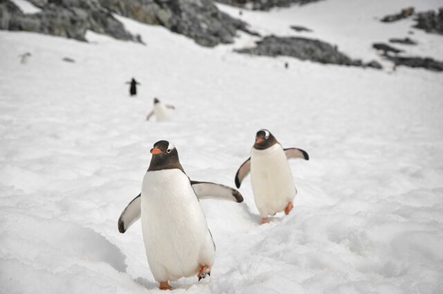 penguins in Antarctica What animals can you see in the USA and Canada? | Amazing Wildlife of Antarctica