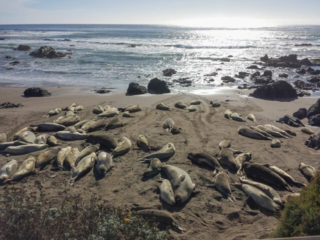 elephant seals in the USA  Amazing animals in the USA and Canada | Amazing Wildlife of Antarctica