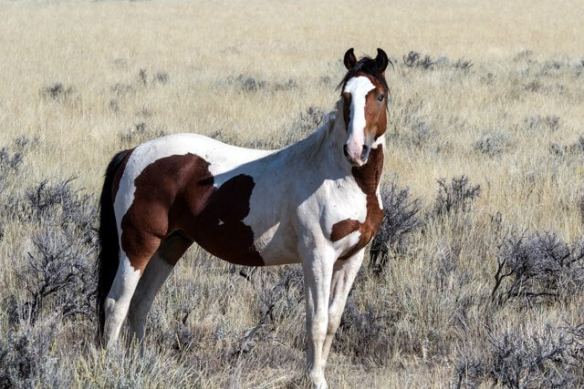 mustang horse in the USA  Amazing animals in the USA and Canada | Amazing Wildlife of Antarctica
