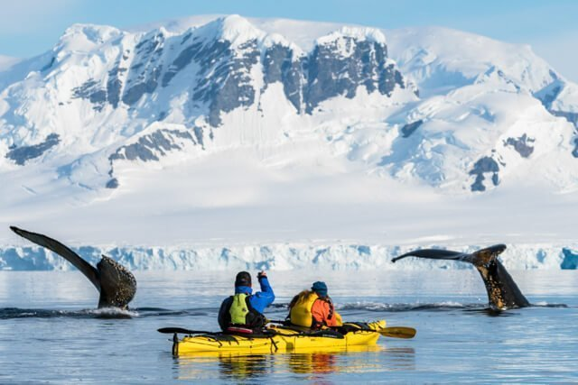 humpbacks in antarctica What animals can you see in the USA and Canada? | Amazing Wildlife of Antarctica