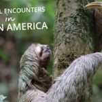 Amazing Wild Animals in Latin America