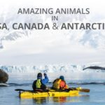 Amazing Animals in the USA, Canada and Antarctica