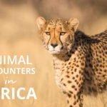 Amazing Animals in Africa