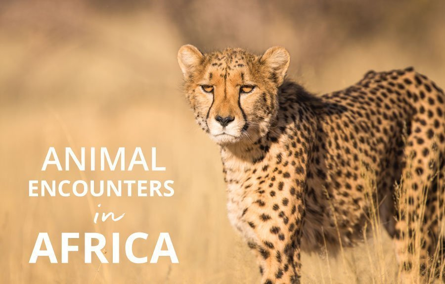 amazing animals in africa castaway with crystal