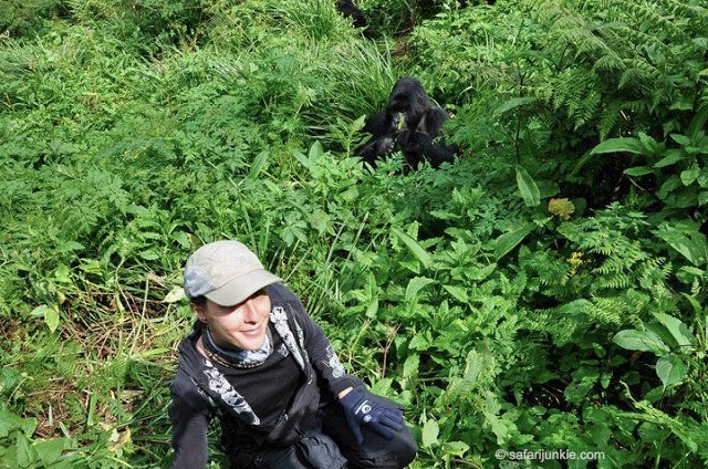 Gorilla in rwanda - Where to go to see wild Africa savanna animals. What wild animals can you see in Africa?