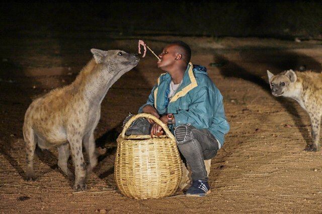 hyena - Where to go to see wild Africa savanna animals. What wild animals can you see in Africa?
