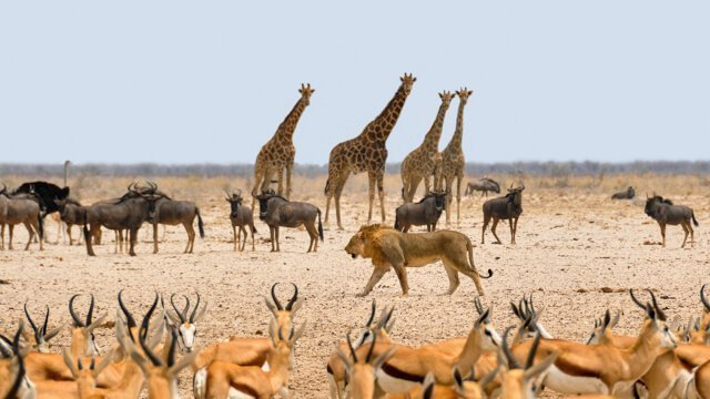 Where to go to see wild Africa savanna animals. What wild animals can you see in Africa?
