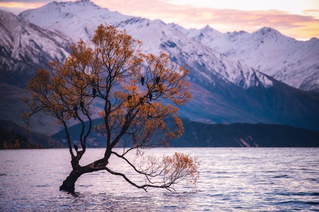 Lake Wanaka tree - Free things to do in New Zealand - Spectacular FREE things to do in Wanaka, New Zealand! | Want to do something different? Need to save money? Hiking in Wanaka is incredible, and there are some pristine watering holes, places to climb and even a famous tree to check out!