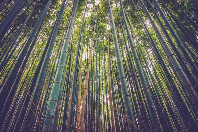 Free things to do in Atlanta USA - Bamboo forest