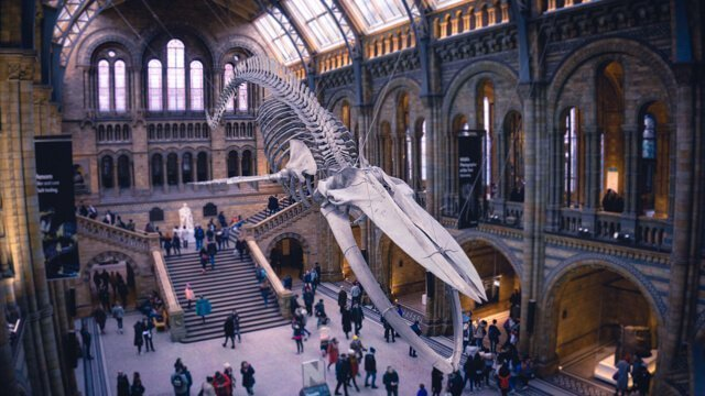 Natural History Museum - Free Things to do in London UK