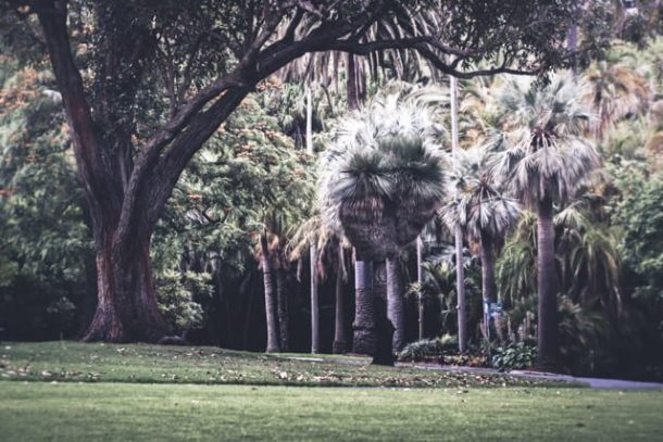 Royal Botanic Gardens  - Free Things to do in Melbourne