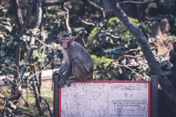 MONKEYS IN HONG KONG - Free Things to do in Hong Kong