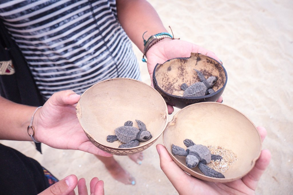 Baby Turtles - travel to oaxaca mexico - things to do in Puerto Escondido