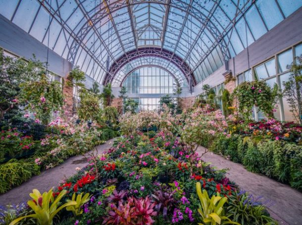 Auckland Domain Wintergardens - Free Things to do in Auckland New Zealand