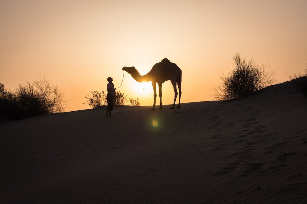 Girl kisses camel - How to save money for long-term travel