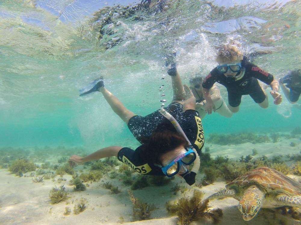Snorkellers looking at turtle for The Best Snorkel Gear Sets for Travel