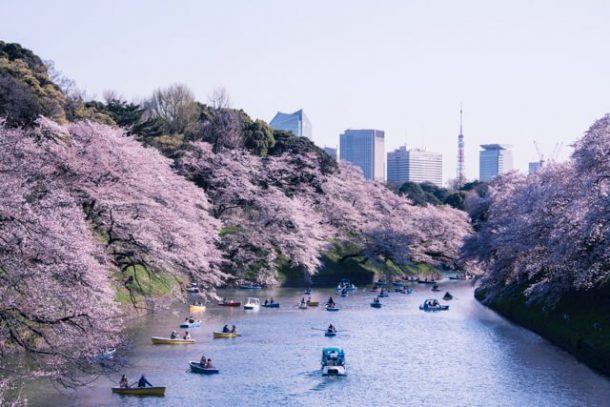 Cherry blossom trees hang over a lake for Free Things to do in Japan