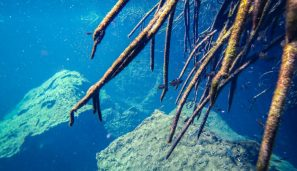 Snorkeling at Casa Cenote for Best Cenotes in Tulum for diving