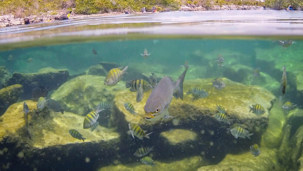 Snorkeling at Yal Ku Lagoon for the Best Cenotes in Tulum, Mexico
