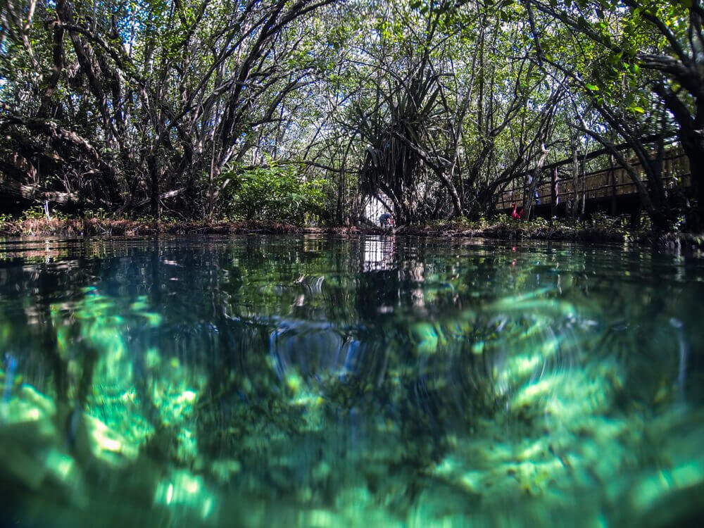 Clandestino Cenote for best Cenotes in Tulum