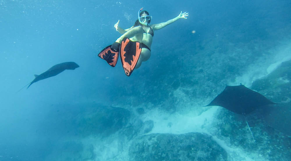 Snorkelling with manta rays for the Best snorkel fins for travel