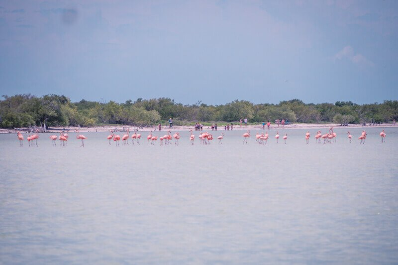 Flamingos on Isla Holbox - Driving in Mexico Road Trip