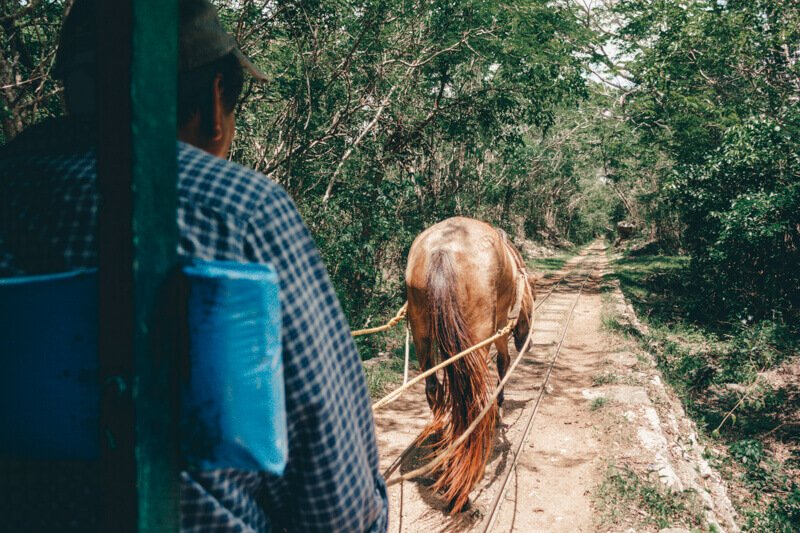 Taking a horse to Coba Cenotes - Driving in Mexico Road Trip
