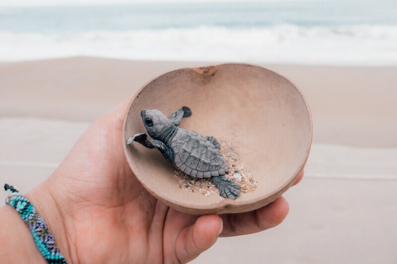 Letting go a bay turtle in Puerto Escondido - Driving in Mexico Road Trip