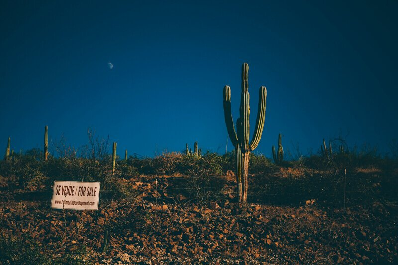 Cactus on the side of the road at night - Driving in Mexico Road Trip
