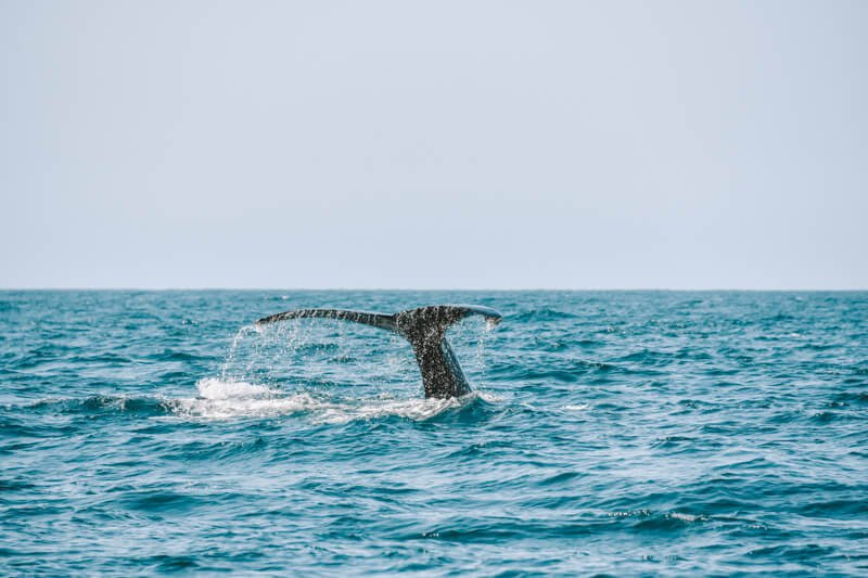 A whale tail in Baja California - Driving in Mexico Road Trip