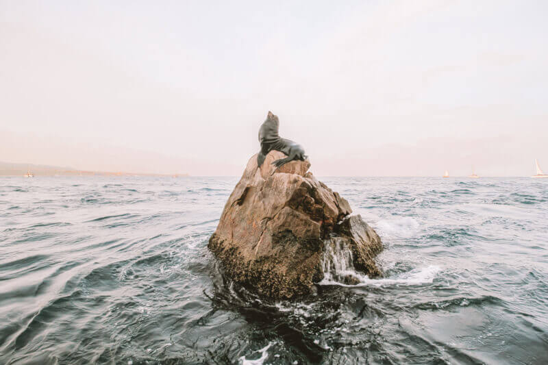 Seal on a rock in Baja California - Driving in Mexico Road Trip