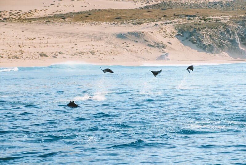 Flying stingrays in Baja California - Driving in Mexico Road Trip