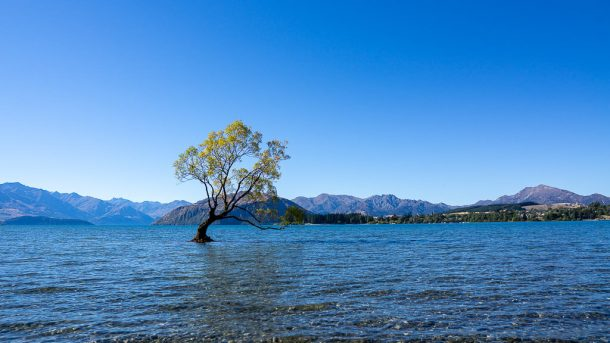 Photograph ThatWanakaTree & Walk Around the Lake for Free Things to do in Queenstown NZ