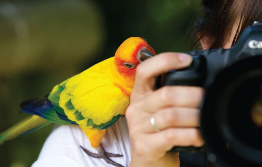 girl takes photo of birds for 100 things to do this year 2021 bucket list